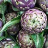 Artichokes Post Image1