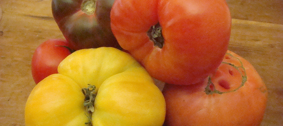Post image heirloom tomatoes - Beyond the Pasta - Mark Leslie